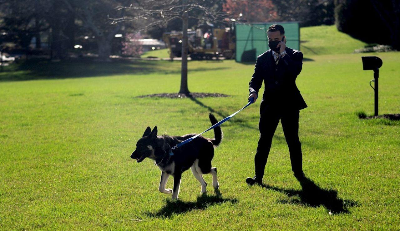 Un empleado de la Casa Blanca pasea a 'Major', el pastor alemán de Joe Biden