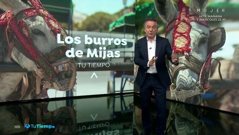 El burro taxi de Mijas, sin turistas por las restricciones