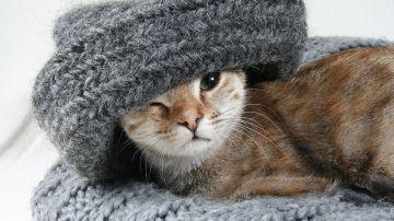 Gato pequeño (archivo)