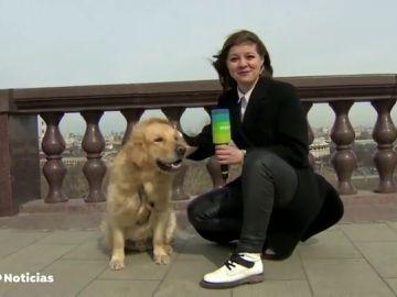 Un perro se abalanza sobre una reportera rusa y le quita el micrófono en pleno directo