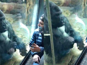Gorila usando una aplicación para ligar