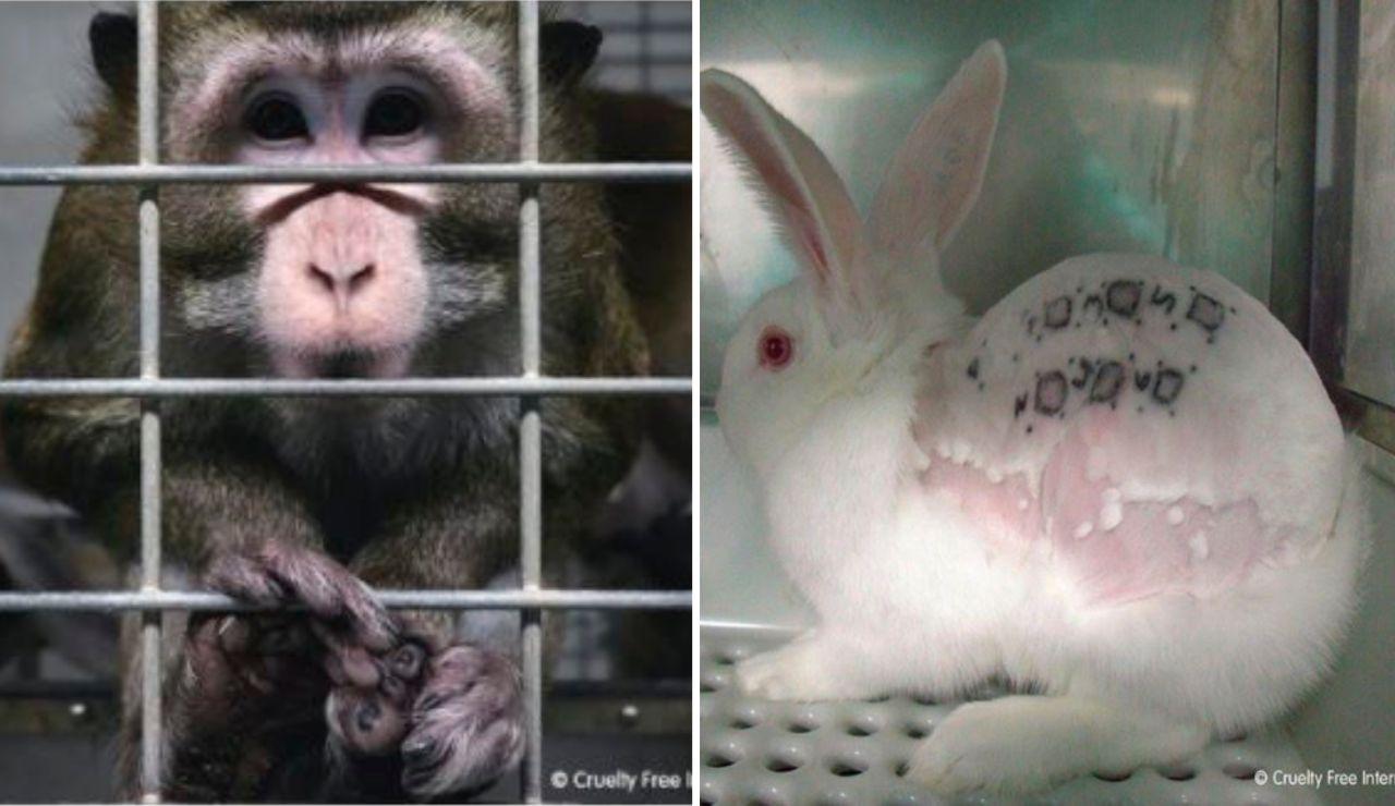 Imágenes del vídeo publicado por Cruelty Free Internacional