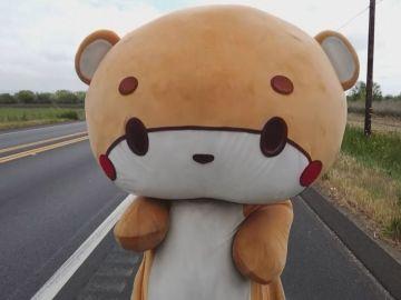 'Bearsun' el oso que camina 600 kilómetros
