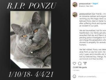 Instagram de Ponzu