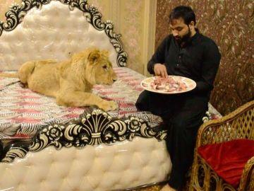 Un hombre tiene un león como mascota