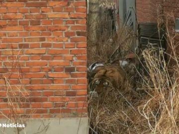 Graban cómo un tigre siberiano ataca a un coche en el noreste de China