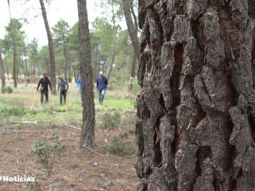 Un proyecto español busca reducir el efecto del cambio climático en los bosques gracias a los fondos europeos
