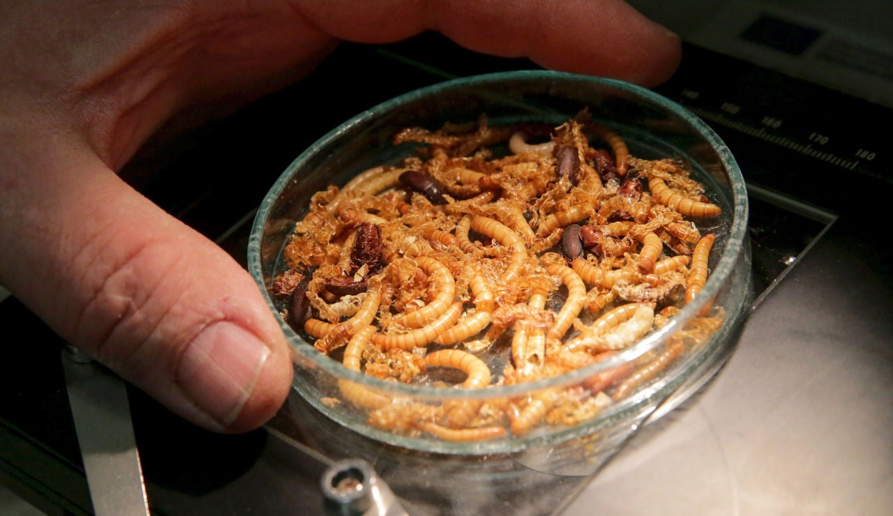 La UE aprueba los gusanos como alimento humano