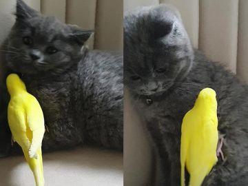 Un gato y un periquito son mejores amigos