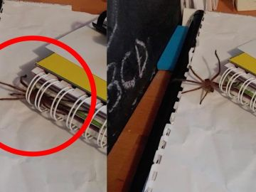Araña escondida en un cuaderno