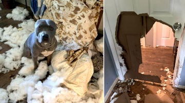 Perro destruye su casa