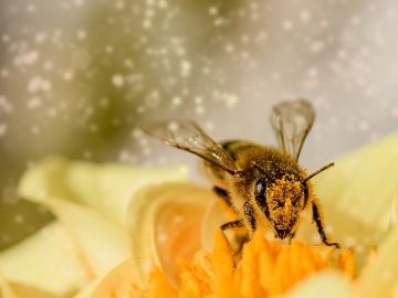 Las abejas son capaces de detectar el coronavirus, según investigadores holandeses
