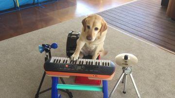 Esta perra orquesta sabe tocar el piano, la guitarra y el tambor