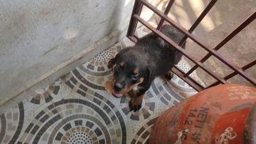 Un cachorro angustiado atrapado en una puerta de metal es rescatado