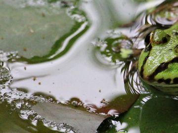 Imagen de archivo de una rana