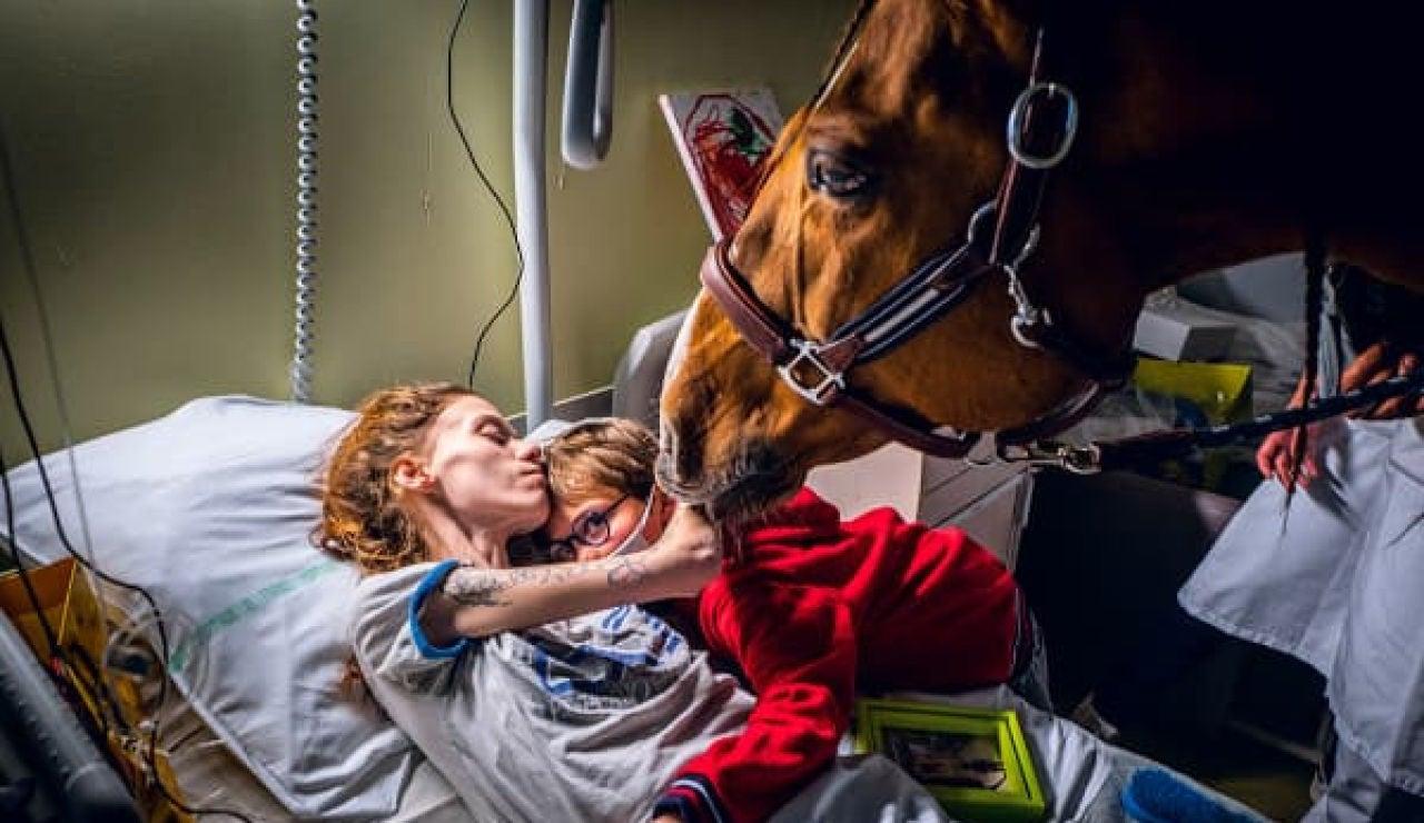 El increíble don del 'doctor Peyo', el caballo que detecta el cáncer