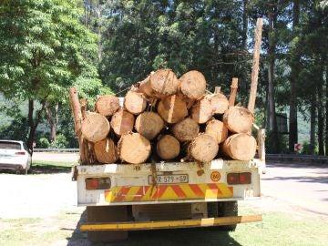 Camión traspntando troncos