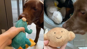Perro con sus juguetes