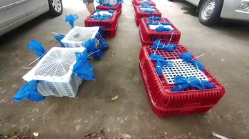 Incautan en Tailandia a cientos de monos que iban a ser enviados al extranjero para ser comidos