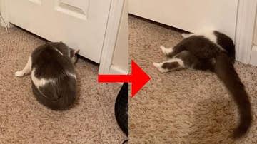 Gato metiéndose debajo de la puerta