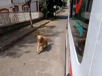 Perro fiel