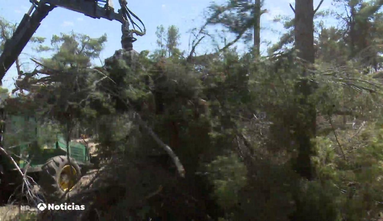 Los árboles rotos por la borrasca Filomena que todavía están sin recoger aumenta el riesgo de incendios