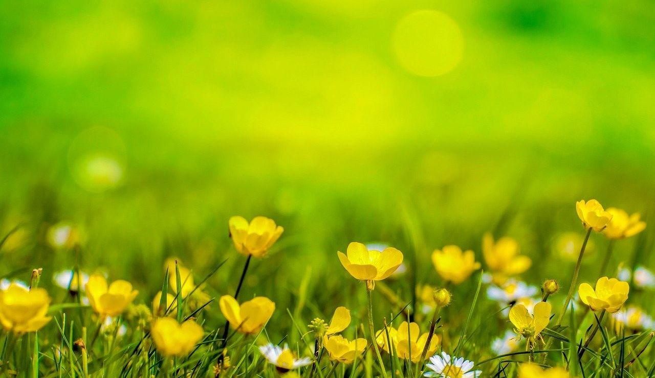 Yellow Day 2021: ¿Por qué hoy es el día más feliz del año?
