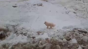 Unos marineros rusos rescatan a un perro perdido en mitad del hielo en el Ártico