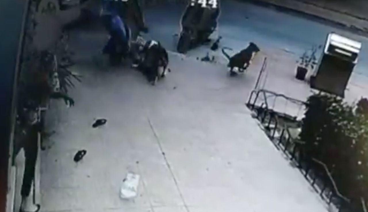 ataque de perro en Ceuta