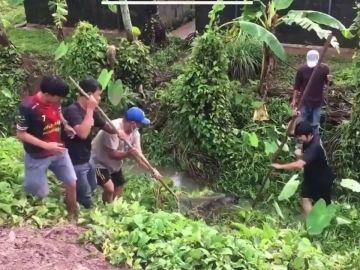 Capturan a una docena de cocodrilos que habían escapado tras una inundación en Tailandia