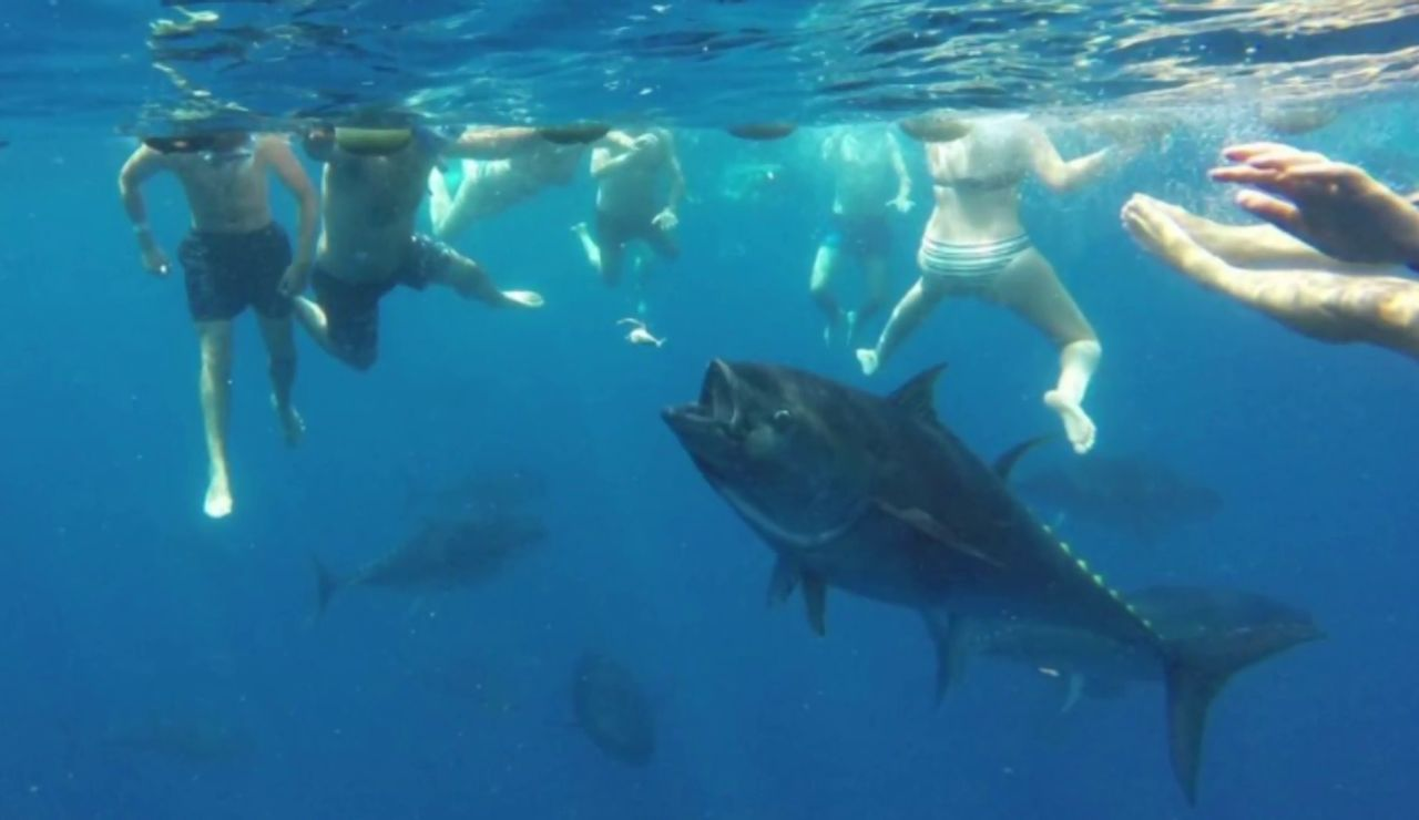 La espectacular inmersión entre atunes rojos de 250 kilos y casi 3 metros en Tarragona