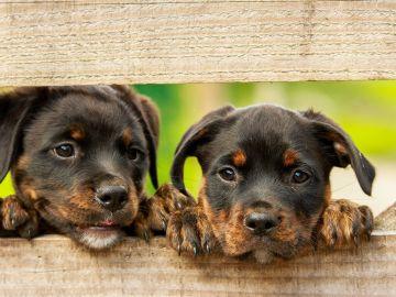 Día Mundial del Perro 2021: Las cuentas más virales de Instagram para seguir el 21 de julio