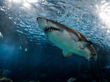 Tiburón [archivo]