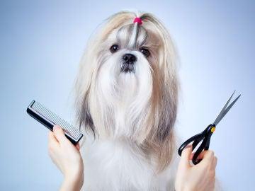 ¿Tengo que cortarle el pelo a mi mascota en verano?