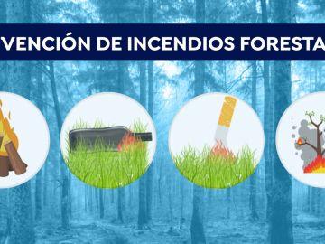 ¿Qué hacer y cómo actuar en caso de encontrarnos con un incendio forestal?