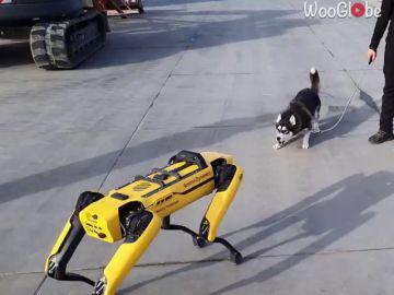 La reacción de un perro al encontrarse con un perro robot