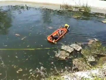 Tres perros se lanzan a y tienen que ser rescatados