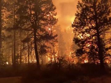 Los responsables del incendio de Horta de Sant Joan aceptan una condena de 8 años de cárcel