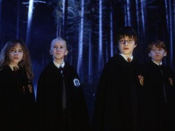 Harry Potter junto a Hermione, Draco y Ron en el Bosque Prohibido