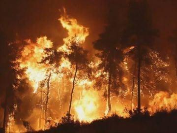 Los incendios forestales arrasan gran parte del planeta