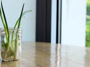 Cómo cultivar tus propias cebolletas sin necesidad de comprarlas