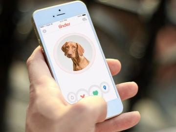 Adopta a una mascota a través de Tinder haciendo 'match' a perros y gatos