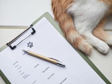 Obligaciones legales con mascotas
