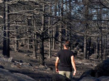 Dan por extinguido el incendio de Navalacruz, Ávila