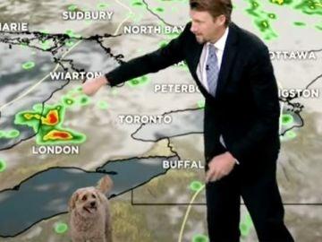Un perro se cuela en una conexión en directo del periodista Anthony Farnell