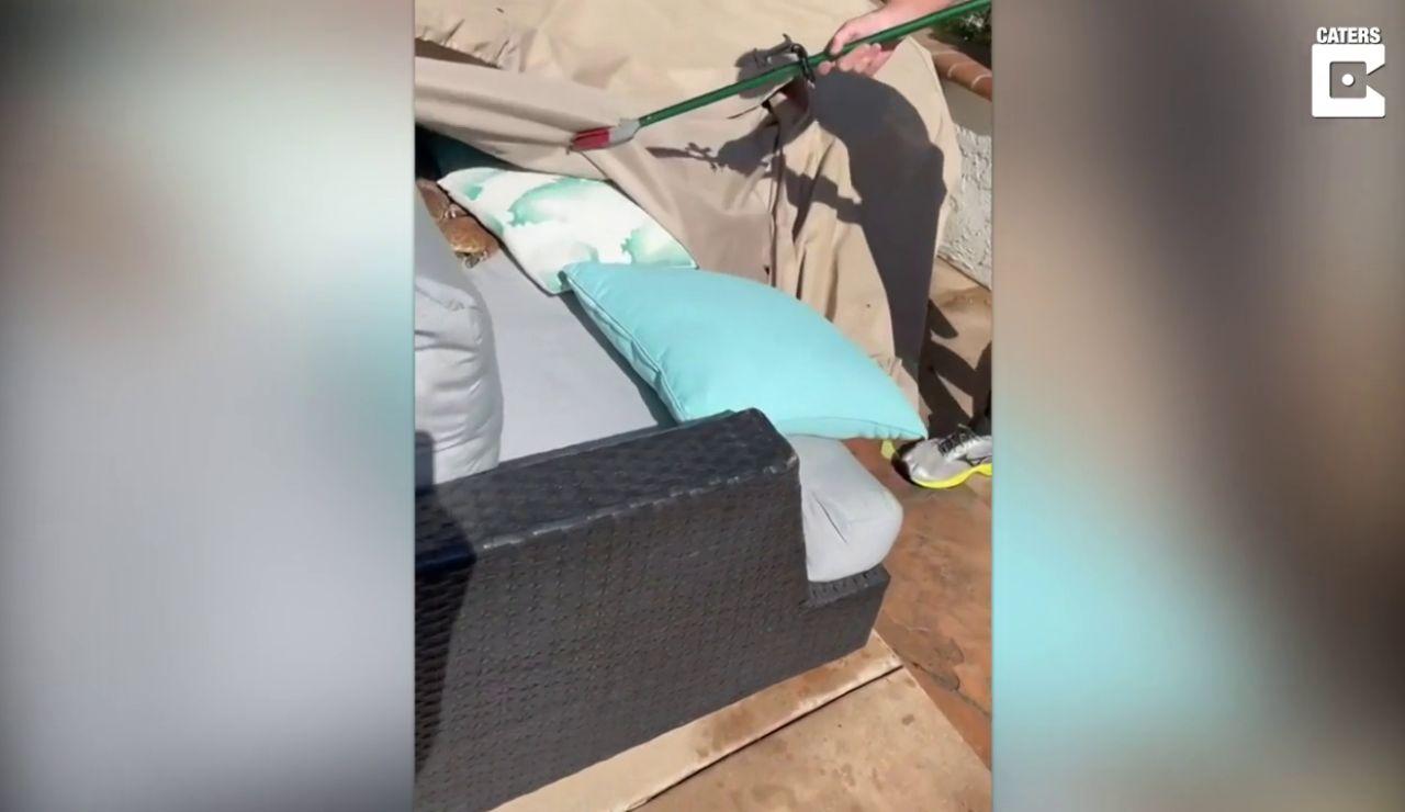 Un chico se encuentra varias serpientes en el sofá de un amigo
