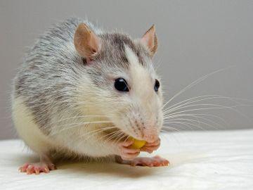 Ratón [archivo]