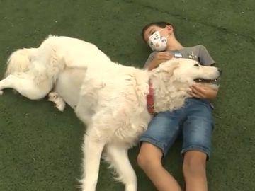 Los expertos aseguran que un perro bien socializado no debería ser agresivo tras el ataque mortal a un niño