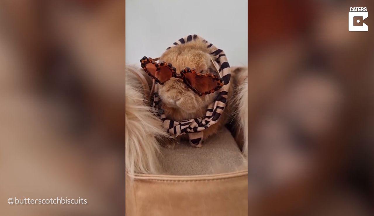 Este podría ser el conejito con más estilo del mundo