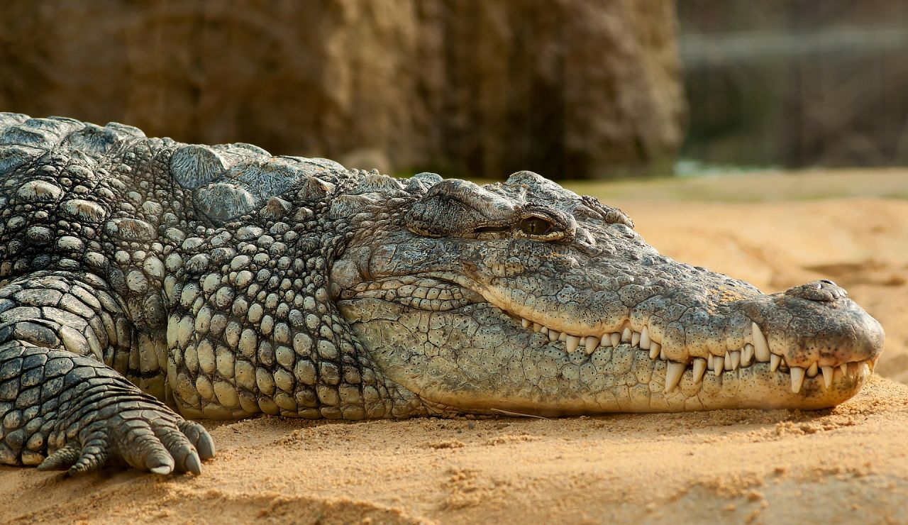 Aleja a un cocodrilo con un remo que quería atacarla mientras navegaba por el río